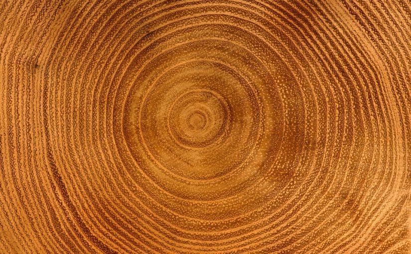 Uvnitř stromu – jak strom roste